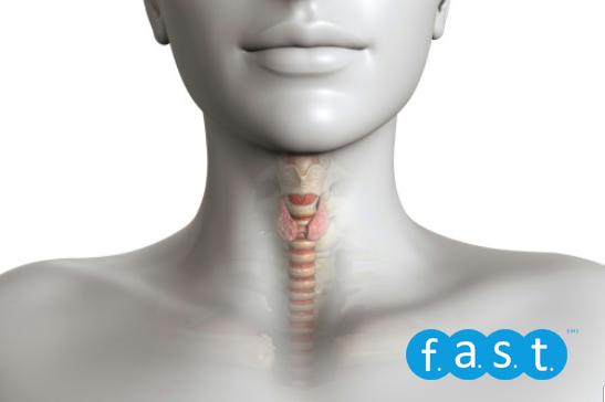 Glándula Tiroides Y Las Posibles Patologías Fast Fitness