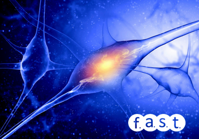 receptores neuromusculares Fast Fitness